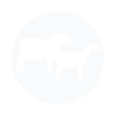 Small Ruminant Nutrition & Health